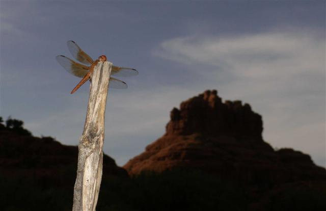Bell Rock Dragonfly